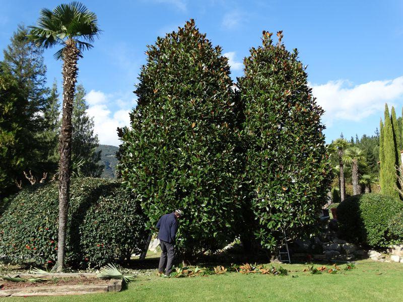 jardiners a girona per podar arbres quan sigui el temp